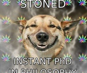 philosophy and stoned image