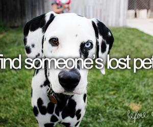 before i die, dog, and pet image