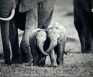 elephant, baby, and animal image