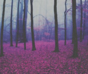 header, nature, and tree image