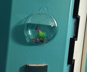 beach, fishbowl, and room image