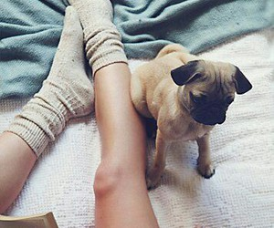 pug, puppy, and vintage image