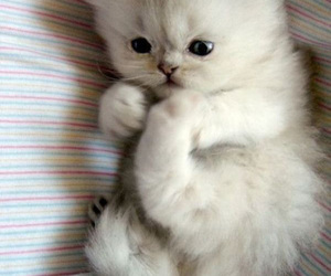 adorable, cuteness, and kitten image