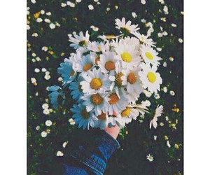 flower, grunge, and girasol image