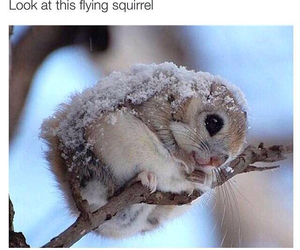 cute, snow, and squirrel image