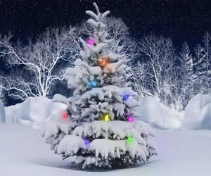 christmas, snow, and trees image