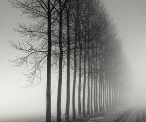 tree, black and white, and dark image