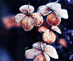 flower, frozen, and nature image
