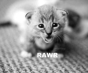 cute, cat, and rawr image