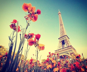 paris, flowers, and beautiful image