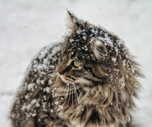 snow, cat, and animal image