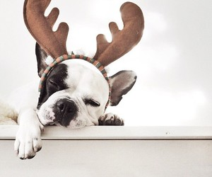 dog, animal, and christmas image