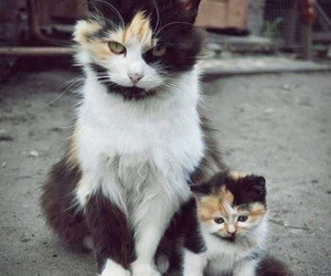 adorable, cats, and cute image