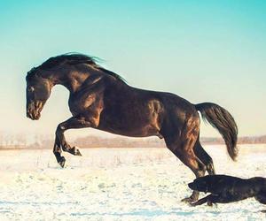 horse, beautiful, and black image
