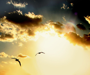 sky, birds, and clouds image