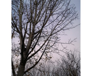 arbol, inspiration, and cold image