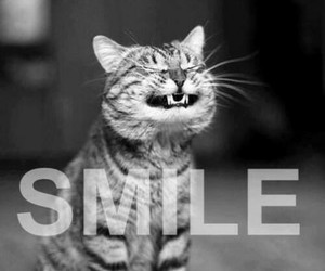 cat, kitty, and smile image