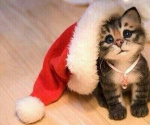 cat, christmas cat, and adorable animals image