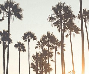 summer, palm trees, and tree image