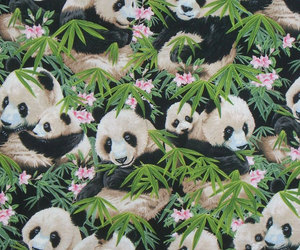panda, bear, and wallpaper image