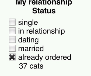 cat, funny, and Relationship image