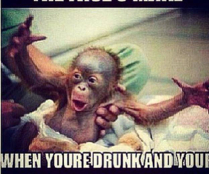 drunk, monkey, and party image