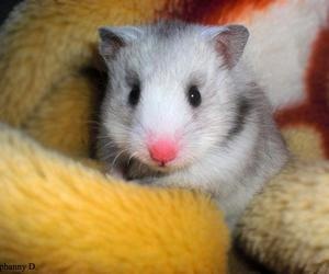 :), love, and hamster image