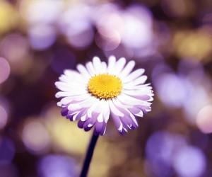 beautiful, flower, and fresh image