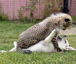 cheetah, dog, and cute image
