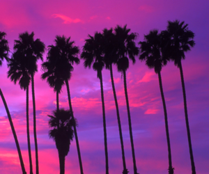 nature, palm trees, and paradise image