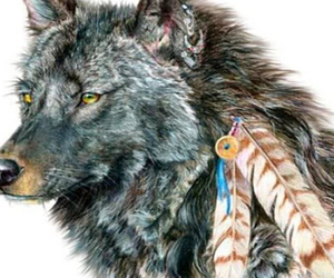wolf, animal, and indian image