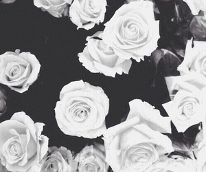 black, rosy, and white image