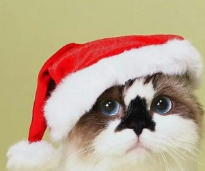 cat, christmas, and red image