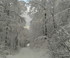 beautiful, first snow, and winter image