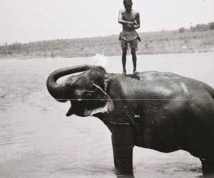 elephant, beach, and black and white image