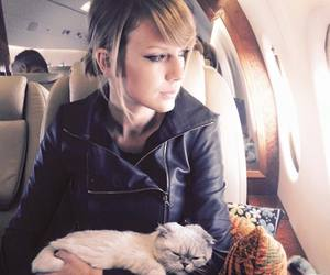cat, nap, and t. swift image