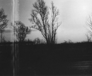 tree, nature, and vintage image
