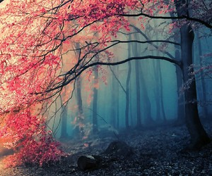 fog, forest, and trees image