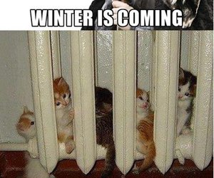 winter, cat, and funny image