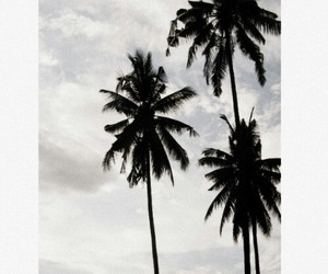 summer, tumblr, and palm trees image