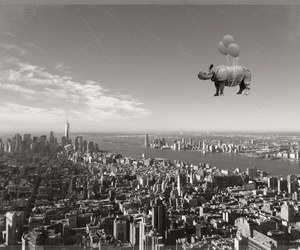 balloons, downtown, and hippo image