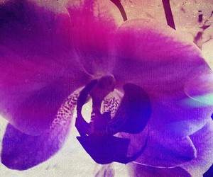 nature, orchidee, and wonderful image