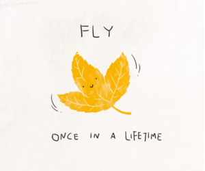 fly, life, and leaf image