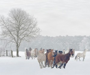 horses, snow, and winter image