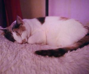 black, blanket, and cat image
