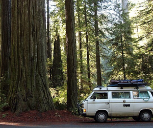 forest, journey, and roadtrip image