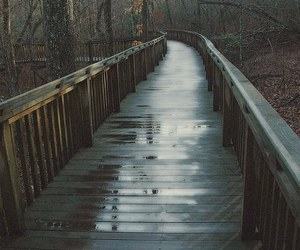 rain, nature, and bridge image