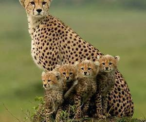 family, nature, and nice image
