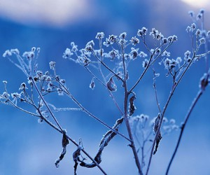 beautiful, photography, and blue image