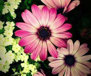 beauty, flower, and purple image